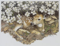 Blossom -- Wildlife Art by Cary Savage Ingram
