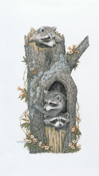 Coon-dominium -- Wildlife Art by Cary Savage Ingram