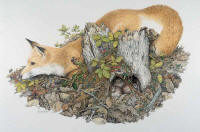 Diversion Box -- Wildlife Art by Cary Savage Ingram